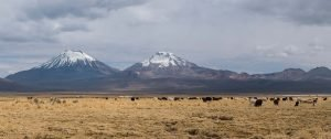 Panorama of Altiplano