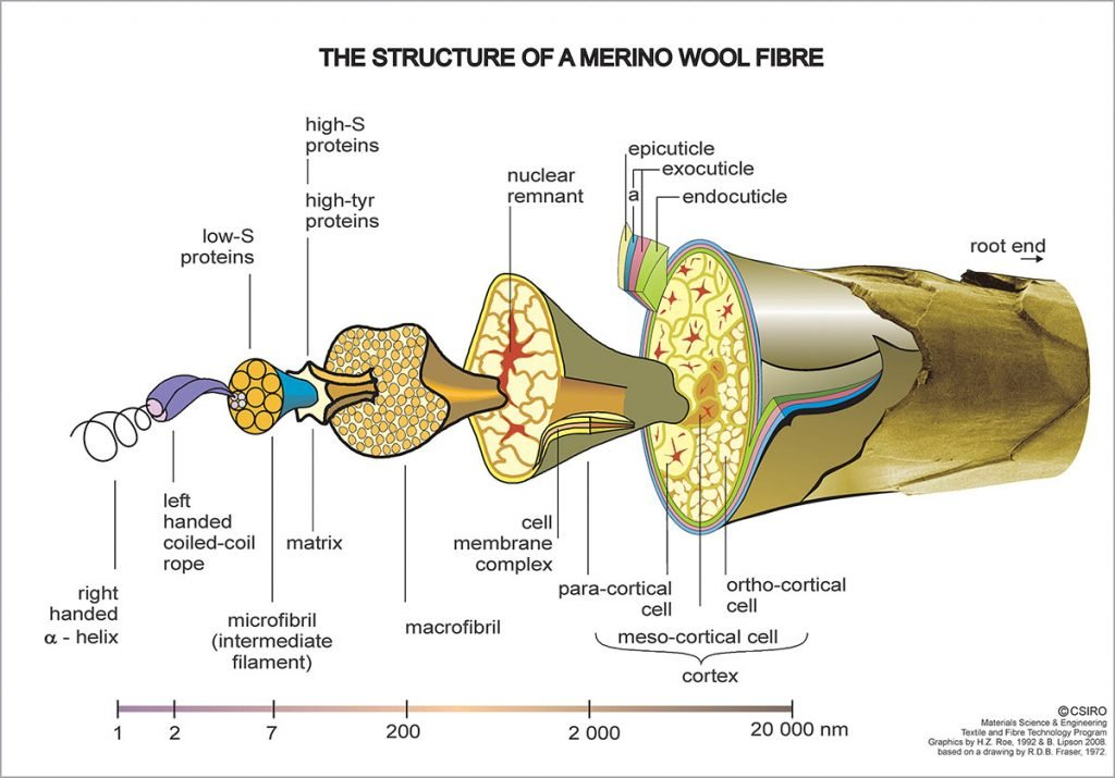 The-structure-of-a-Merino-Wool-Fibre---Science-Image-high-res