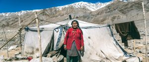 changpa nomads featured