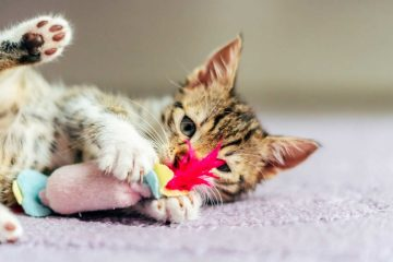 Cat toys made of wool